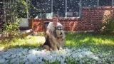 Austin Animal Center throws snow party for terminally ill dog