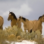 US court overturns round-up of wild horses in Oregon