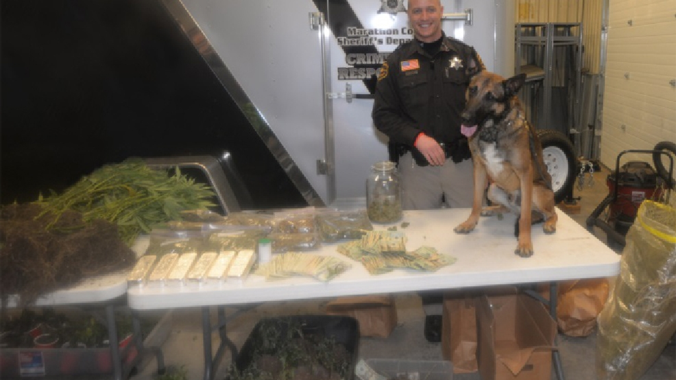 Marijuana seized in a February 2014 drug bust near Athens in Marathon County. (Marathon Co. Sheriff's Dept./WSAW)
