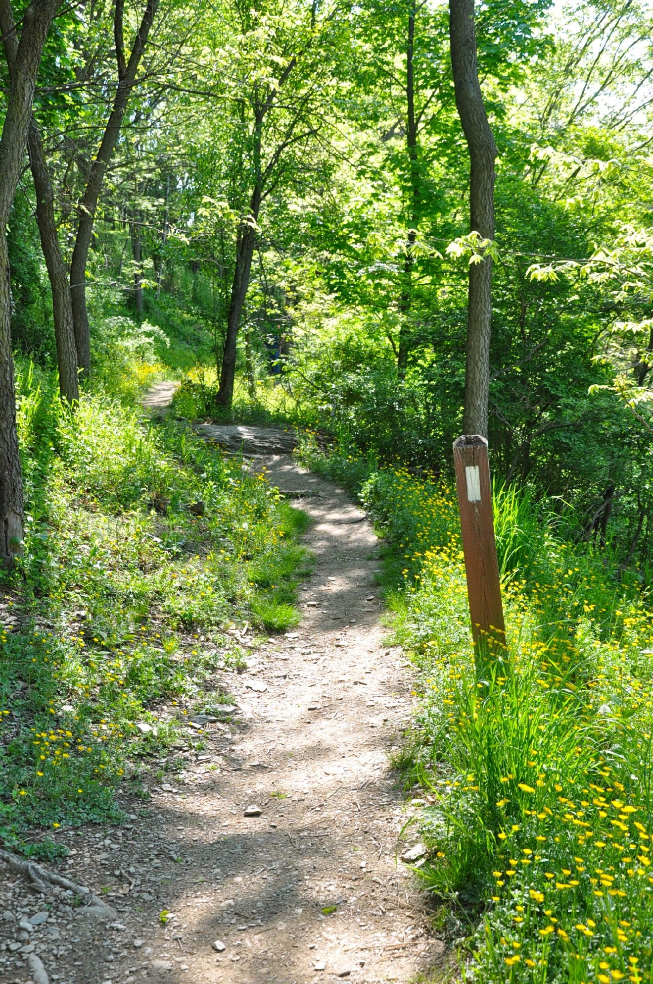The National Park Service and Appalachian Trail Conservancy on Wednesday  lifted fire restrictions on 27.7 miles of the Appalachian National Scenic Trail in Virginia.  (Photo credit: Appalachian Trail Conservancy)