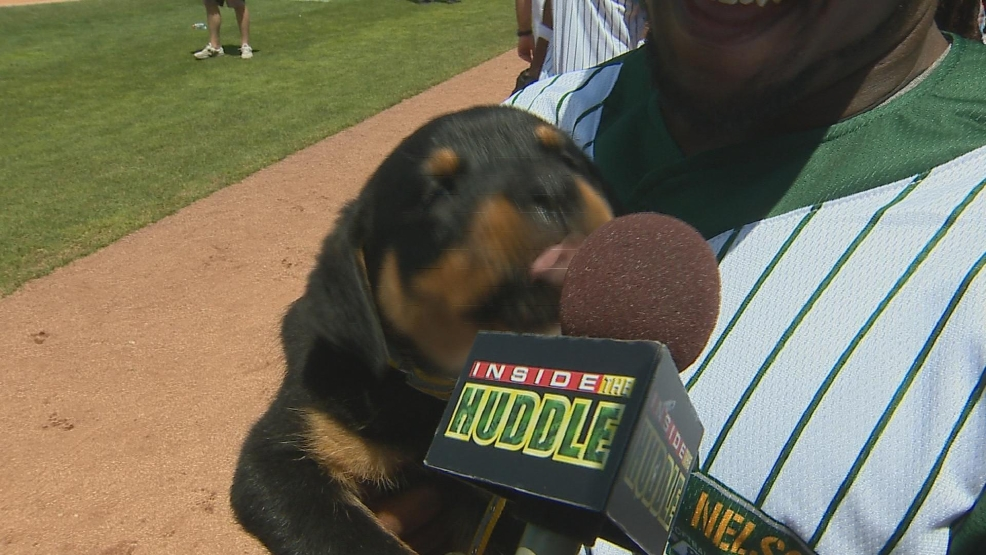 Packers running back DuJuan Harris' new puppy Rollo.