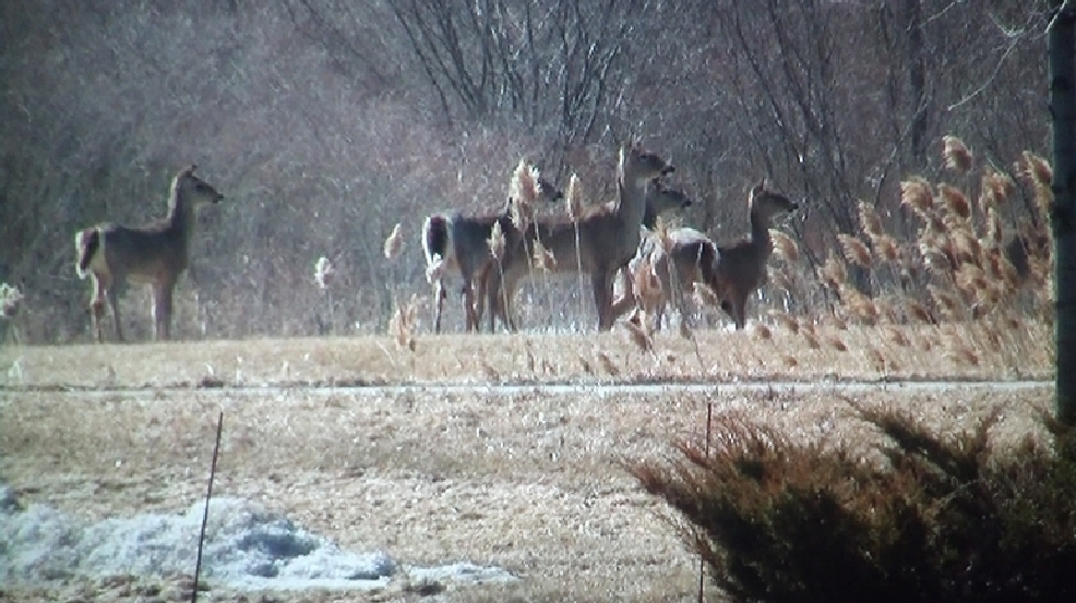 A herd of deer in De Pere, Tuesday, April 8, 2014. (WLUK/Eric Peterson)