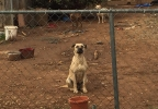 hoarder's dogs.jpg