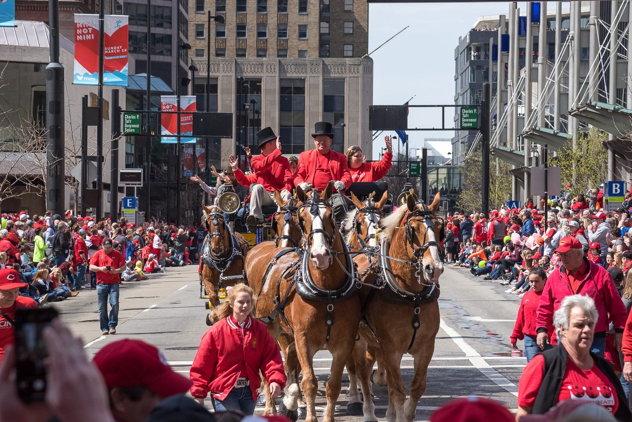 The Budweiser Clydesdales / Image: Phil Armstrong, Cincinnati Refined // Published: 3.29.18