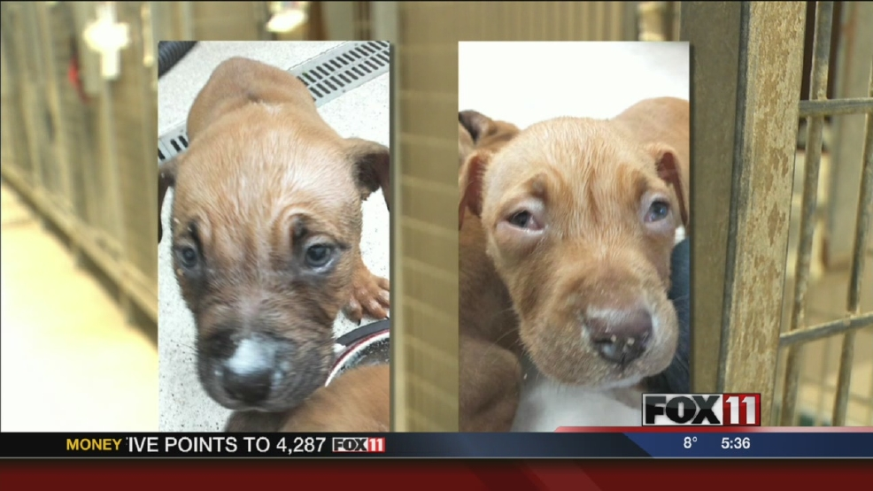Puppies doused in bleach recovering