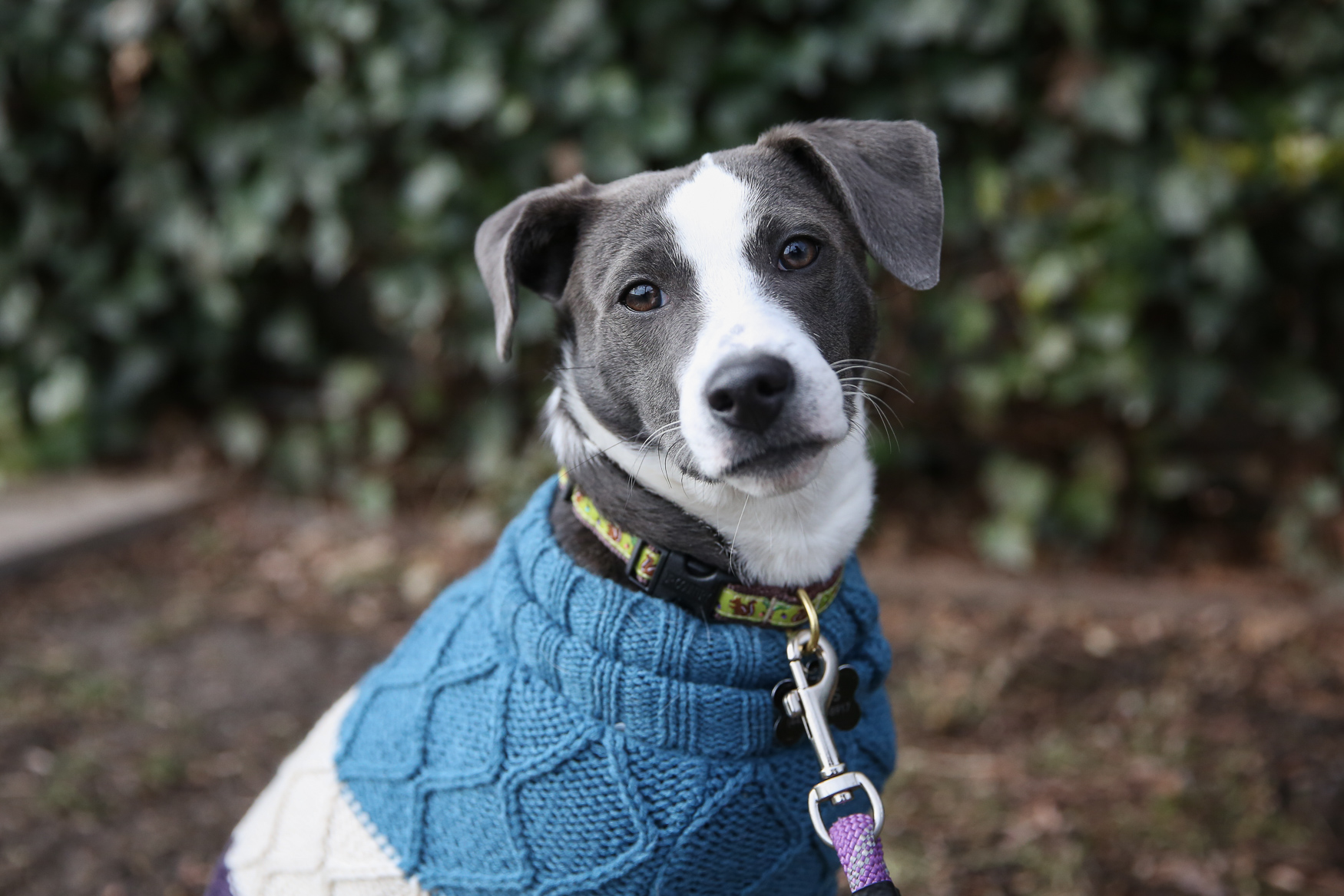 This week's DC RUFFined star is Millie, a 6-month-old Feist who is living her best life in D.C. Millie was adopted from{ } Wolf Trap Animal Rescue in October, and since then she's been enjoying watching Caps games at The Brig, cuddling and making friends with other dogs. Millie also loves toys, peanut butter and the show Peppa Pig, but she's less enthusiastic about being alone, the cold and baths. Her special talents include standing on her hind legs and playing fetch with two balls. If you're interested in having your pup featured, drop us a line at aandrade@dcrefined.com (Amanda Andrade-Rhoades/DC Refined)