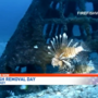 Flora-Bama hosts Lionfish Removal & Awareness Day: 'They are eating what we like to catch'