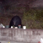 Black bears spotted daily in Douglas County, officials say