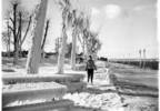 03_Jackie_Anderson_walking_on_ice_Alki_Beach_Seattle_January_14_1950.jpg