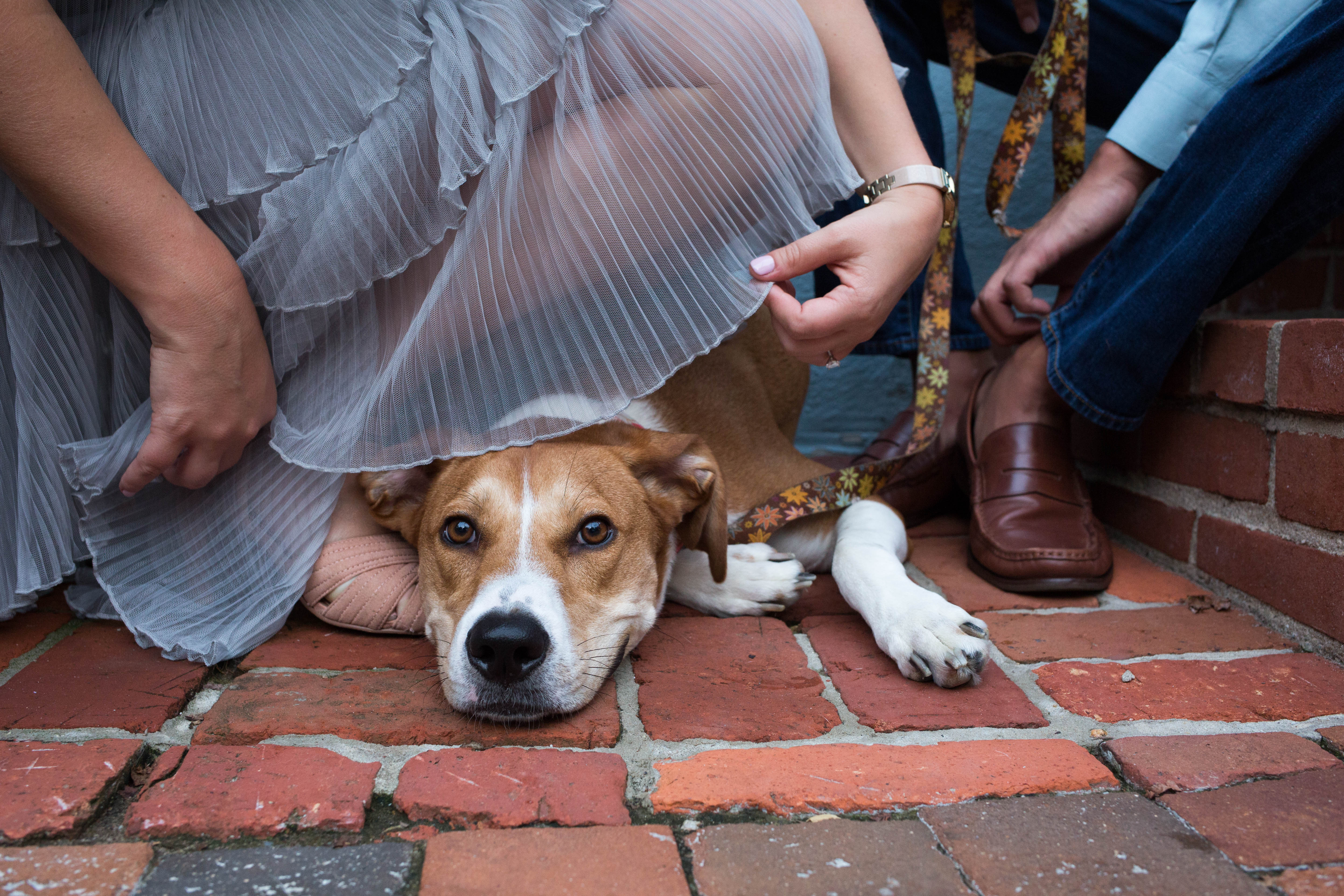 Saturday, August 18 is Clear The Shelters day, a national effort to find pets in shelters 'fur-ever' homes. If you're not sure about adoption, these dogs are proof you can find your hiking buddy, bed warmer and best friend this weekend. (Amanda Andrade-Rhoades/DC Refined)