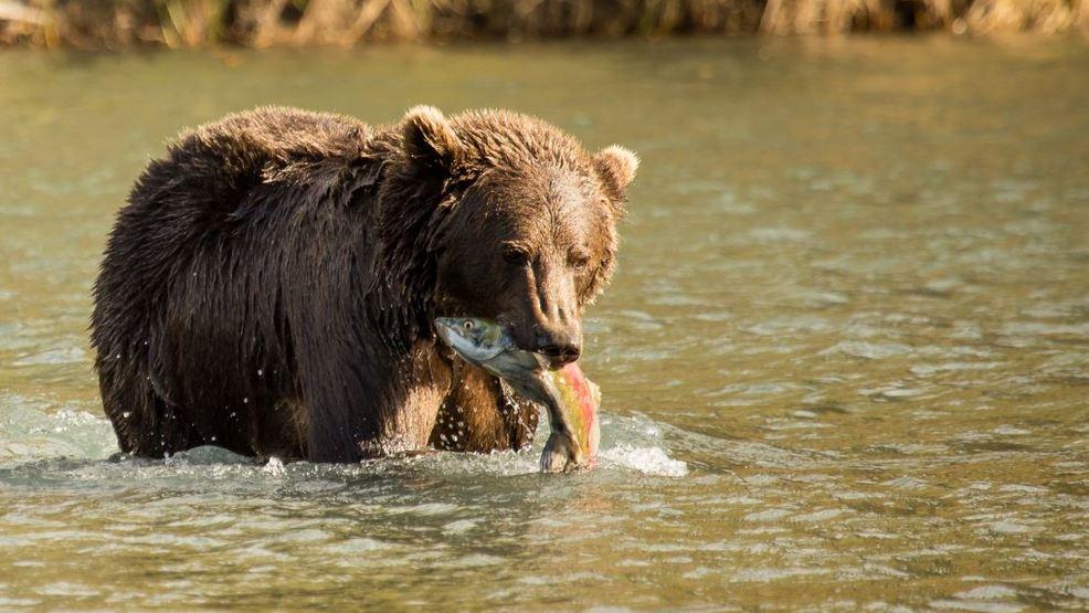 All national wildlife refuges fee-free for National Wildlife Refuge Week