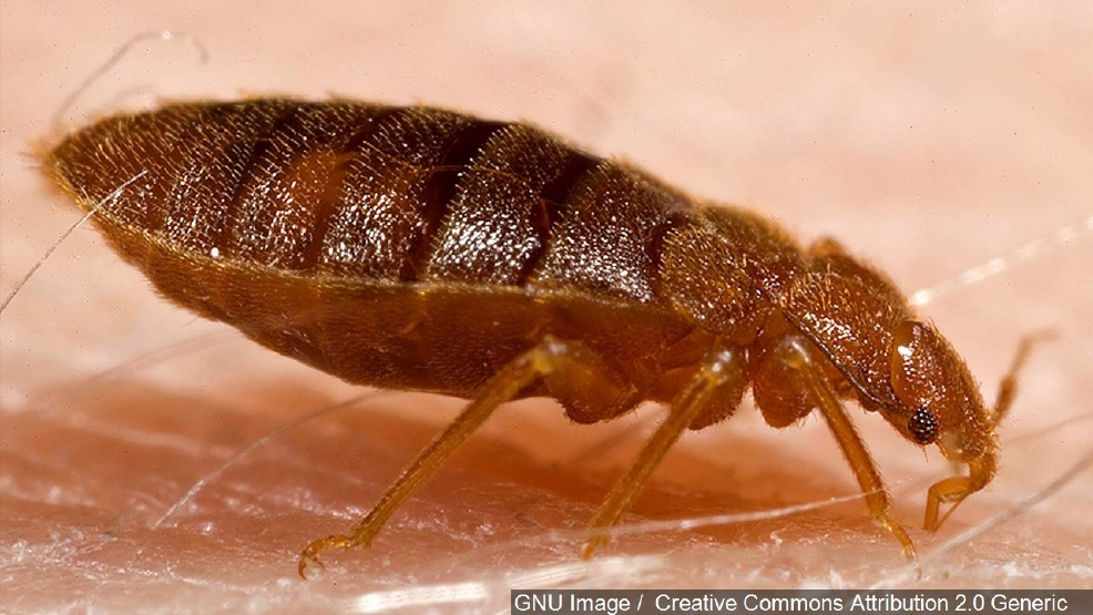 Scientists Map Bedbug Genome Follow Pest Through Nyc Subway Wpec