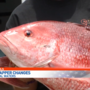 Red snapper changes in federal waters