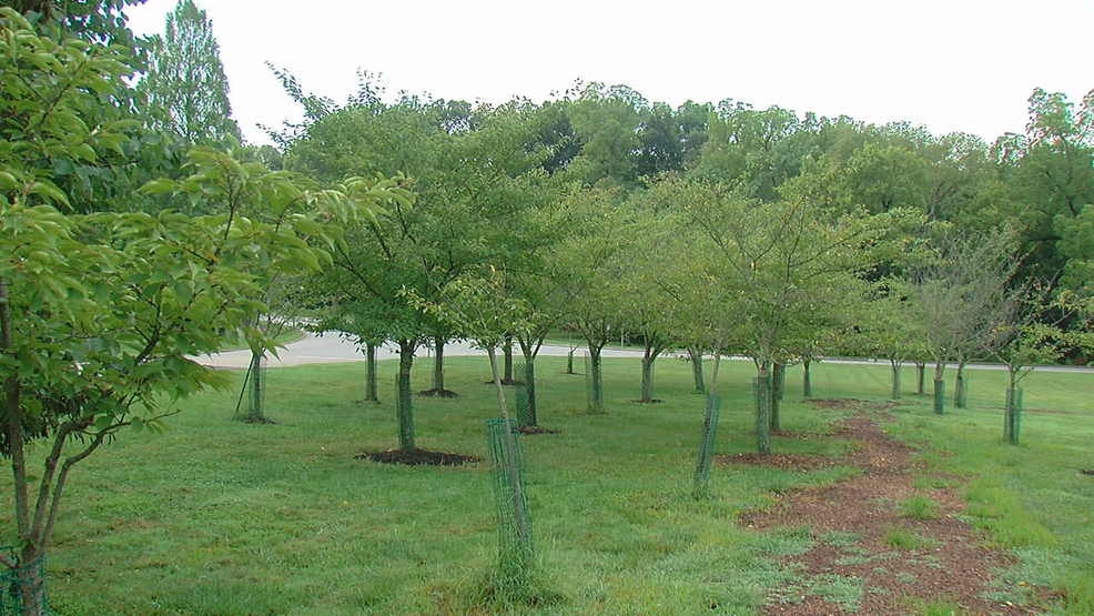 Cincinnati Parks is giving out free trees as part of its 'ReLeaf' program