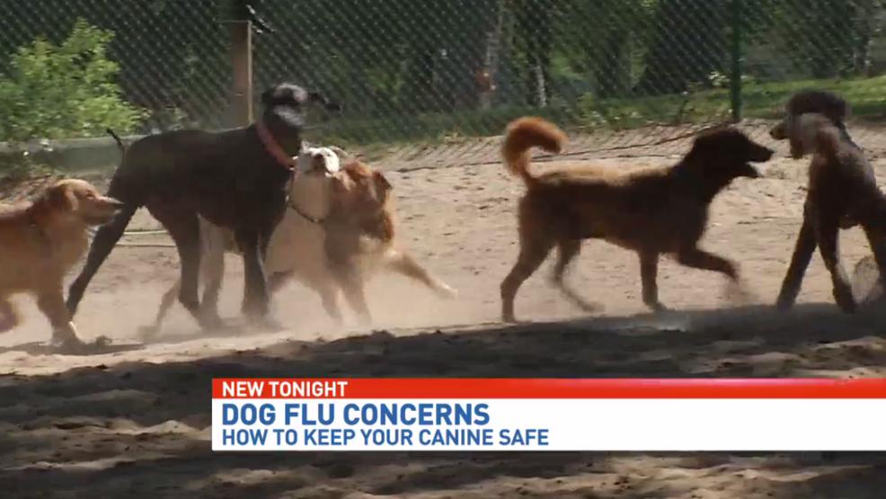 Influenza canina difusión a través de partes de la Florida - DESGASTE 1