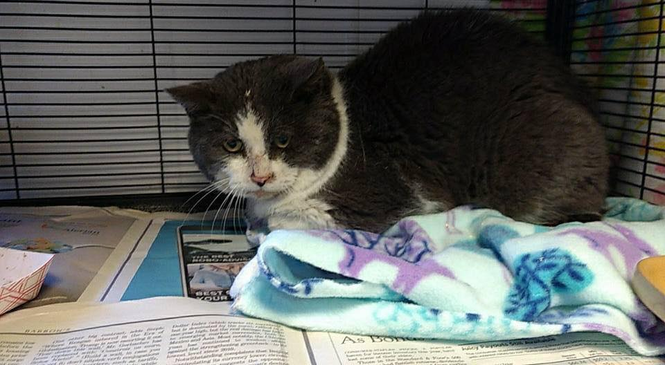 Humane Society of Midland County said they found a male cat left in a frozen plastic tote with a rock top at their location. (Photo courtesy of{ }Humane Society of Midland County)