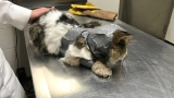 Deputies talk to person responsible for duct-taping cat