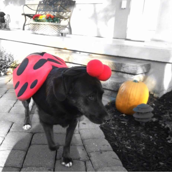 IMAGE: IG user @stellathespy / POST:{ }#tbt to the time Mamz turned me into a ladybug to go trick or treating at Grandpaw's House!