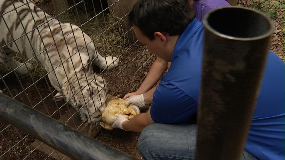 Take This Job and Love it: Animal Caretaker