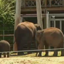 OKC Zoo: Young Asian elephant has low-level strain of deadly virus