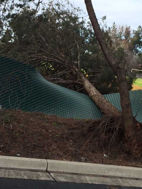 A tree fell on the fence around Elmer Wood Elementary School in Atwater. Photo by Brenda Estacio 1-20-17