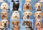 Parkland therapy dogs featured in yearbook 2.JPG