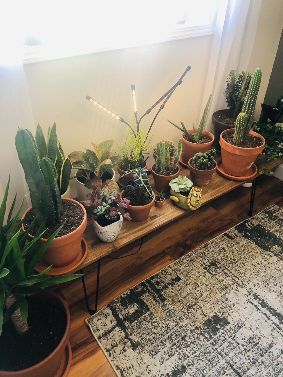 "Megan Huffmeyer (IG: @meg_plantagram) from Colerain Township / ""I have always loved plants and had a small collection that I started a few years ago. As I feel is true for many, my collection expanded even more throughout COVID. My collection started with mainly succulents and cacti, but after seeing all of the variety of calatheas, I wanted to push myself to take care of something more finicky. My inspiration for my room came from wanting to combine my love for the outdoors with my compassion for all living things. With working on a crisis team and dealing with additional stress from COVID, I also felt this sense of urgency to create a space for myself to where I could decompress and unwind within the safety of my home, given limited access to the outdoors. I've also been inspired by the many bloggers out there who share their stories and inspirations, like Hilton Carter and his book 'Wild at Home'. My favorite part about this room is sitting in my rocking chair in the corner and reading up on my current plants. I won't lie, I also spend hours gasping in excitement when I see new growths."" / Image courtesy of Megan Huffmeyer // Published: 6.13.20"