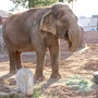 Cancer treatment of El Paso Zoo's elephant to be featured on 'Animal ER'