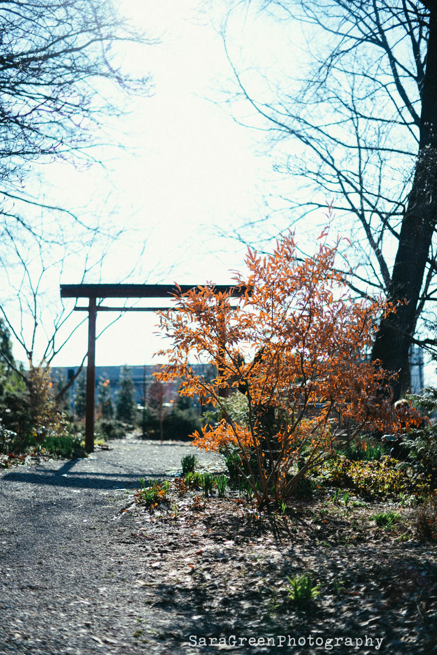 Follow the Hauck Legacy Trail to learn about trees, fruits, and vegetables. And to get another workout, you can volunteer for a variety of workdays in community gardens around the city. Not up for a walk? Get your stretch on and attend a yoga class. Yoga in the Garden is offered onsite once a month. / Image: Sara Green Photography // Published: 4.18.19
