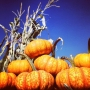 Looking for some fall fun? Maybe a spooky attraction in Tri-Cities?