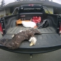 Bald eagle found dead with talons cut off near Oregon/California border