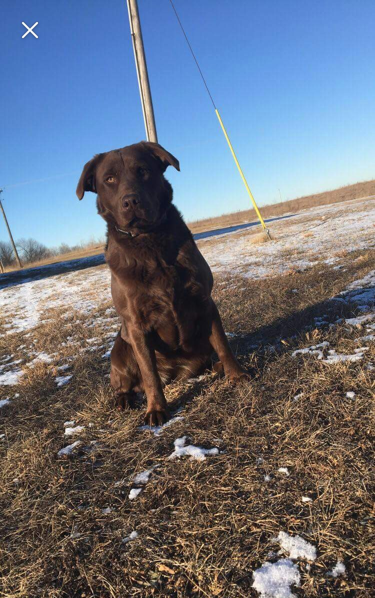 "<p>NAME: REMI</p><p>BREED: LABORADOR RETREIVER</p><p>MISSING SINCE: JANUARY 19, 2018</p><p>WENT MISSING FROM: EXCELLO</p><p>""Our dog was stolen from her kennel in our backyard."" -Shelby Pettig, Owner</p>"