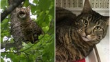 Cat rescued after being stuck in tree up for adoption