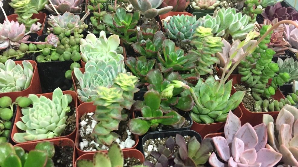 Spring Home Garden Show Katu
