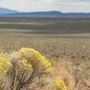 Officials: Efforts failing to save US West sagebrush land