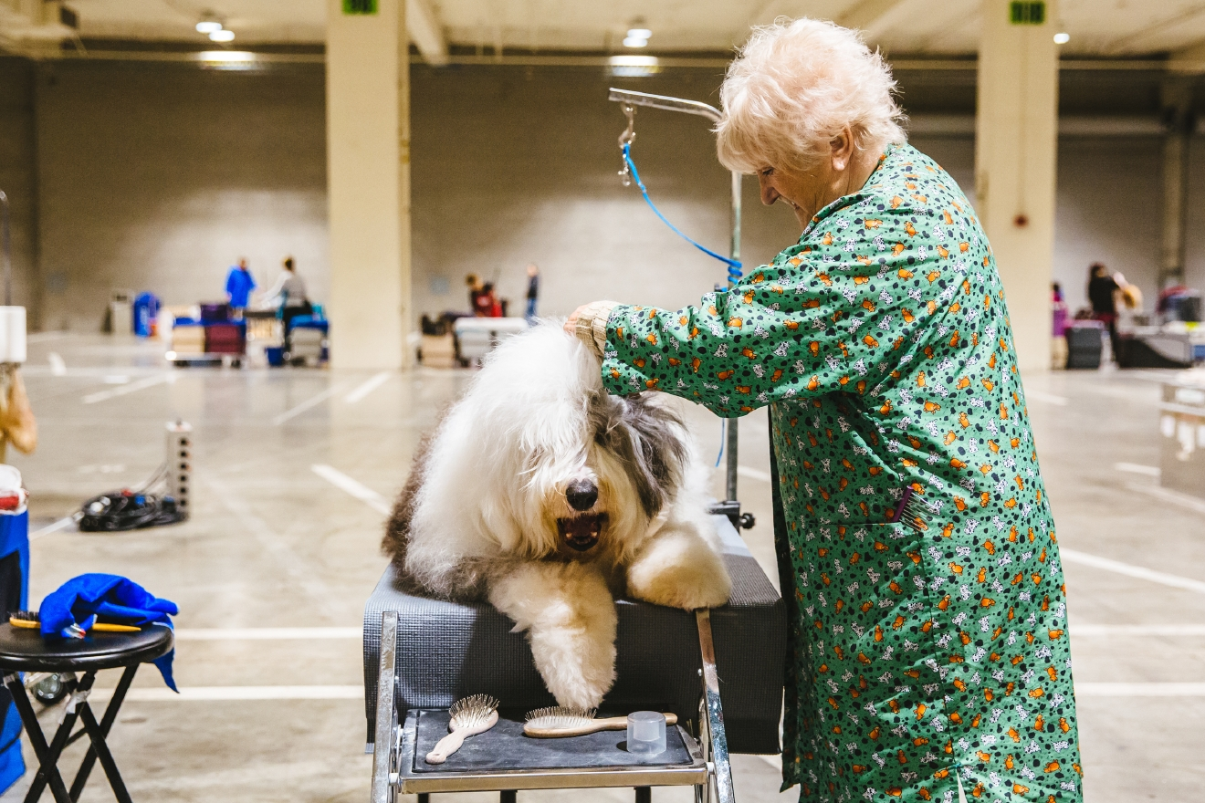 Sure, there is the actual competition part of the Seattle Dog Show - but perhaps our favorite aspect of the show is watching the dogs getting groomed *before* they enter the ring. The grooming room of the Dog Show is where we see the owners and handlers of these perfect pups showing their animals with love, adoration, and a strong blowdryer! Click on for some of the best pictures (we think) of the entire show - dogs getting groomed! (Image: Sunita Martini / Seattle Refined)
