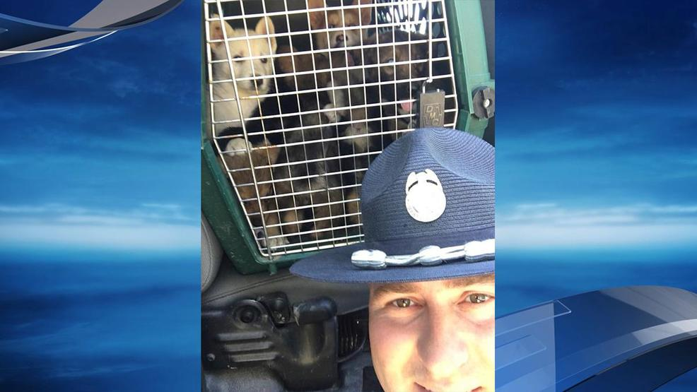 oregon state police k9 unit rescues puppies from trunk of