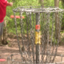 Disc golf growing rapidly in Michigan hotbed