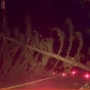 Large downed tree knocks out power, blocks Scholls Ferry in both directions