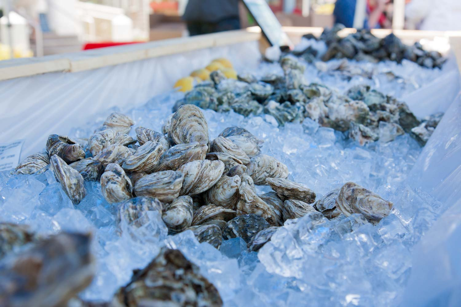 Freshly shucked oysters are on the menu at Savor Seabrook.