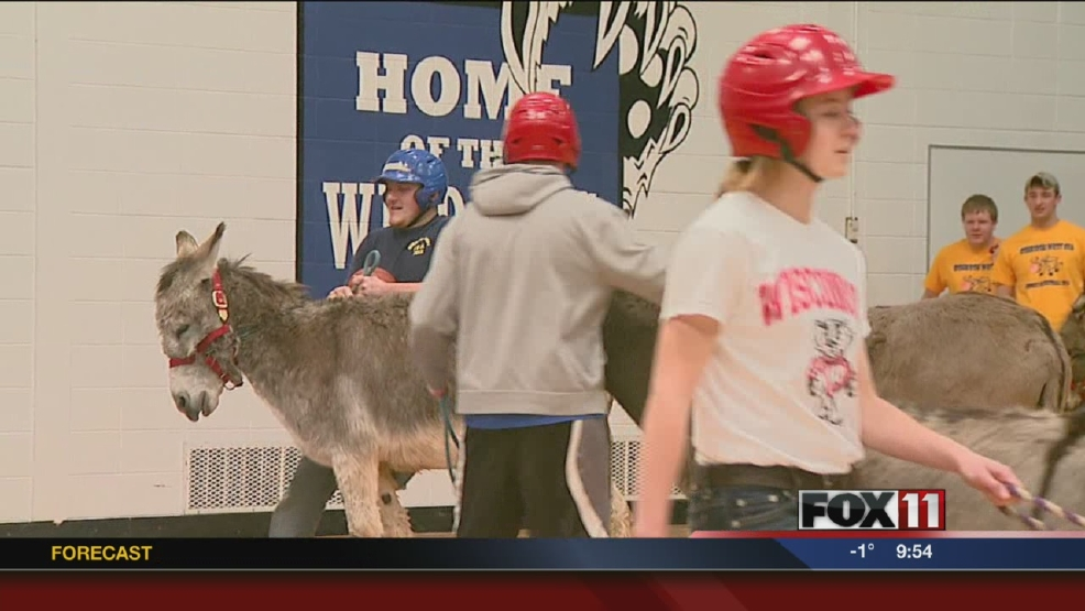 Donkey basketball a fun challenge