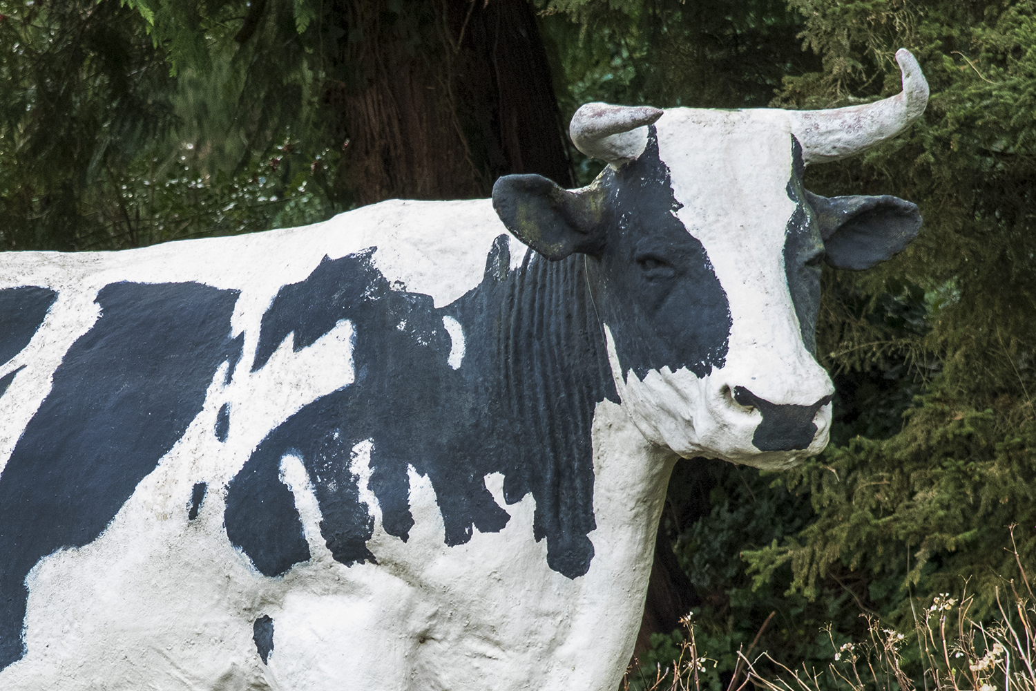 At the age of 12, Possum Sweetheart traveled on to greener pastures leaving the farmers and her milker to grieve her passing. And in 1928, the world's first ever known statue of a Holstein cow was constructed in honor of Segis Pietertje Prospect. (Rachael Jones / Seattle Refined)
