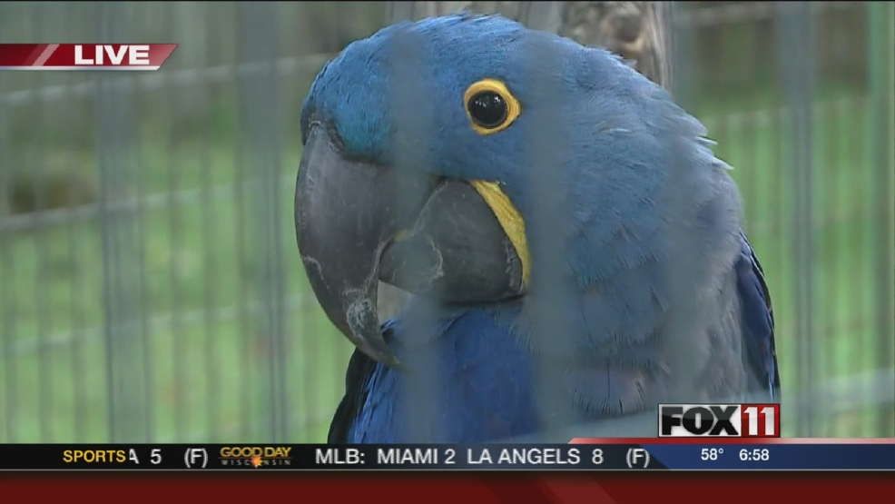 Endangered Bird at NEW Zoo