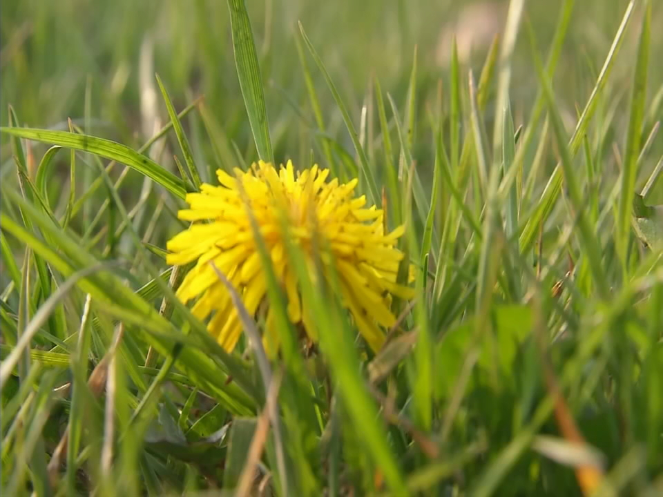 As summer months approach, allergy sufferers are seeing symptoms get worse. (WSYX/WTTE)