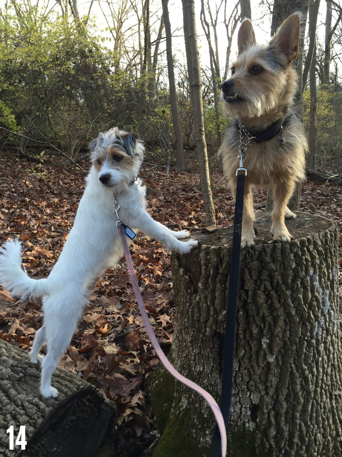 "STORY: ""Best Bets: The Ultimate Dog Hikes In Cincy"" / FEATURED HIKE: Ault Park / IMAGE: Leah Zipperstein, Cincinnati Refined / Published: 12.25.16"