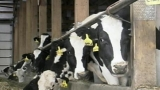 Possible progress on Wisconsin dairy farm crisis