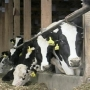 Dairy farmers hold out hope for Trans Pacific trade deal