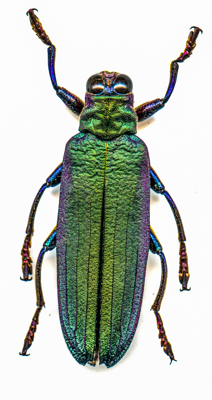 Leaf Beetle{ }/ Image: Catherine Viox // Published: 4.12.20