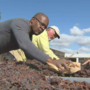 Valley Mormons volunteer to produce a raisin crop