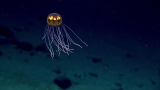 Photos from the deep unveil weird and wild sea critters